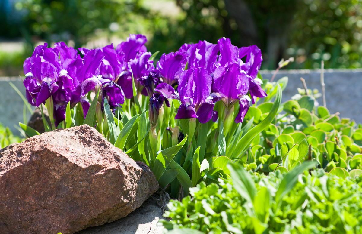 Toruń zakładanie ogrodów projekt ogrodu ogrody Toruń