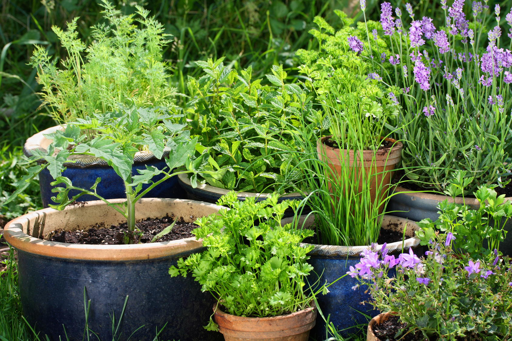 aranżacja ogrodów - projektowanie ogrodów - aranżacje ogrodów Toruń