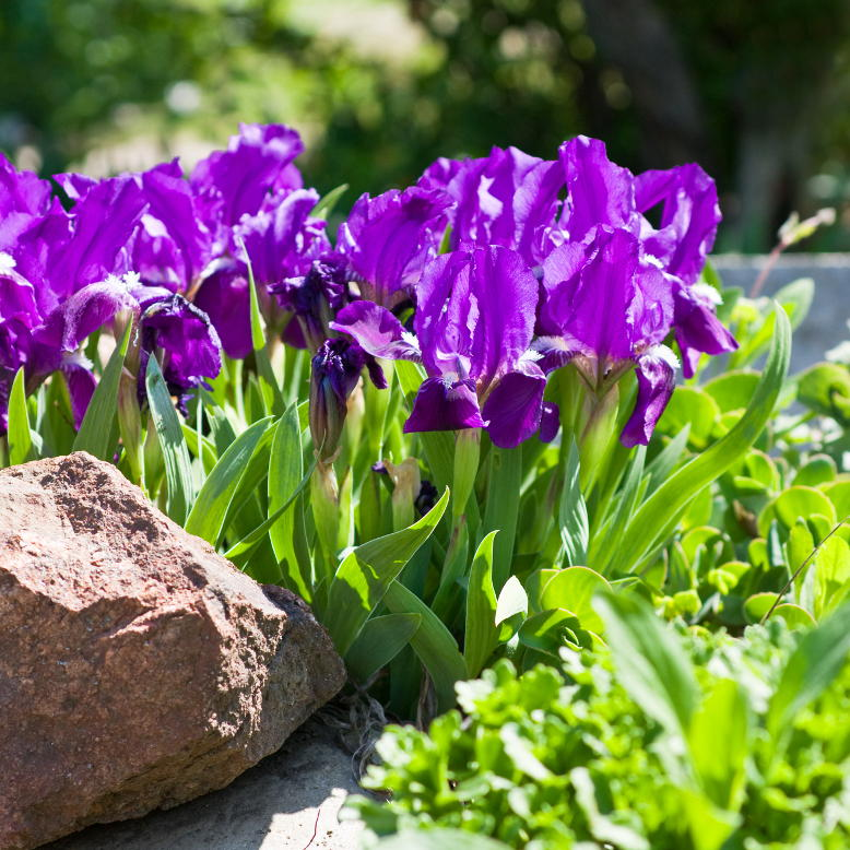 Toruń zakładanie ogrodów projekt ogrodu